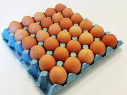 telur ayam papan