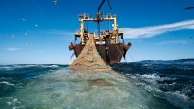صورة موريتانيا:باخرتا صيد تحاول استنزاف الثروة السمكية أثناء التوقيف لبيولوجي