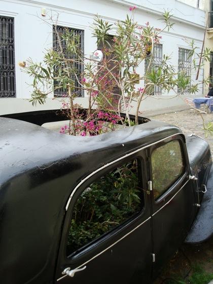 Auto antiguo con plantas en Colonia