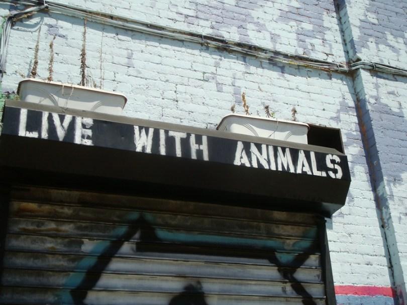 Live with animals, cerca del East River en Brooklyn
