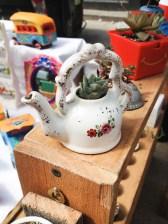 Mini suculenta dentro de tetera de porcelana. Foto
