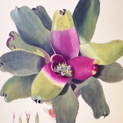 Postales de viaje de Lucila Domínguez: Ilustración de Bromelia, planta típica de la Mata Atlântica brasileña en el MAM de Sao Paulo. Foto