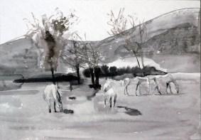 Pferdeherde