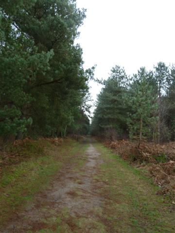 rendlesham-forest05