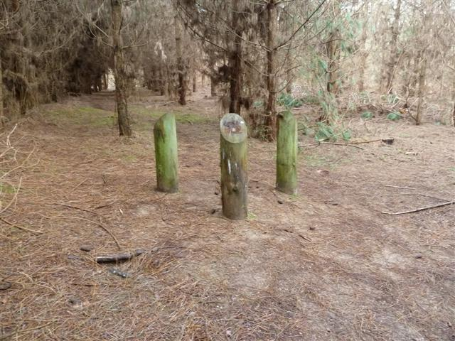 rendlesham-forest09