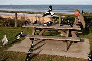 Feeding the Magpies at Shelly Beach.  Taken by P.Dunkley