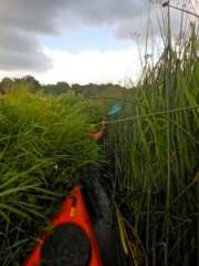 Portage points are good but some stretches clogged with reeds