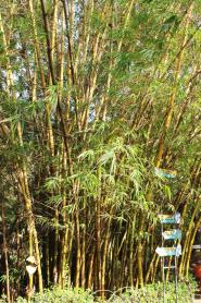 Bamboo groove at the botanical park.