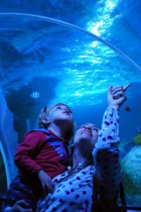 Southend-aquarium-5