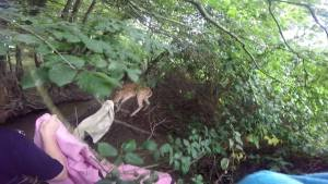 Ridgewood Deer Rescue