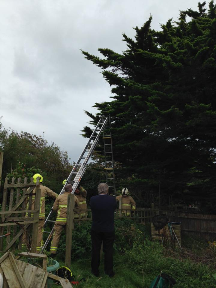 Fire Service works with WRAS to rescue Crow in Seaford
