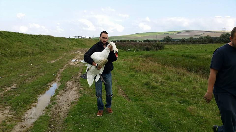 Newhaven Swan with rescuer Chris