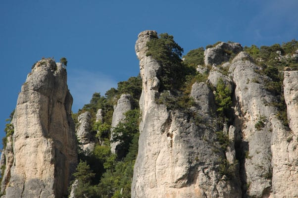 Vultures' cliff in Jonte Gorges
