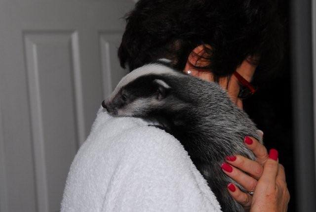 Monica with a baby badger