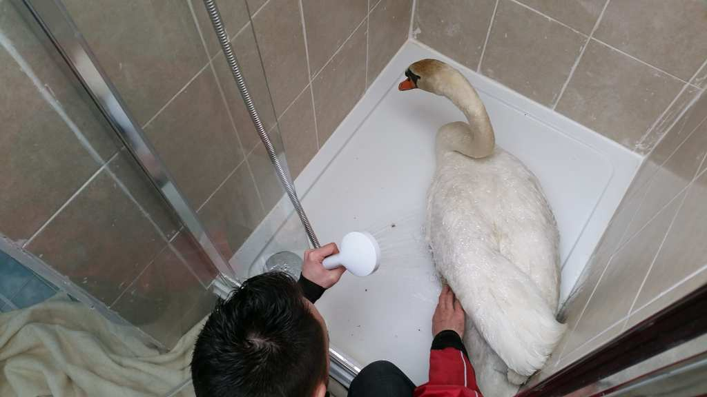 Chris washing down the swan