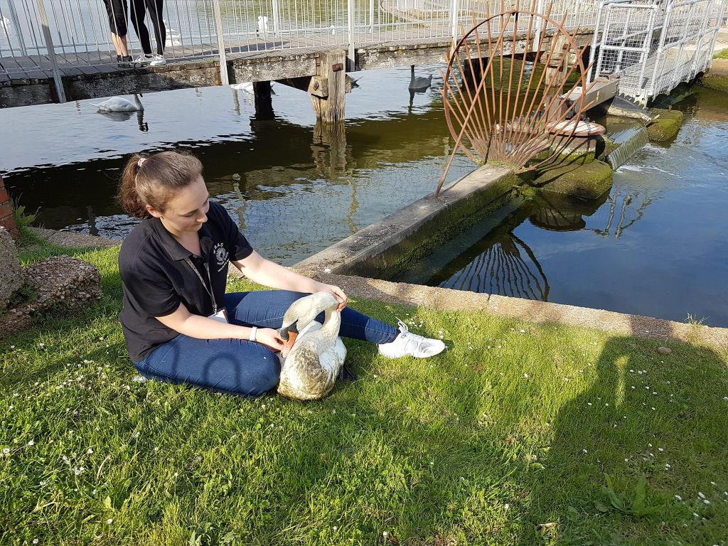 Katie with the Princes Park Swan
