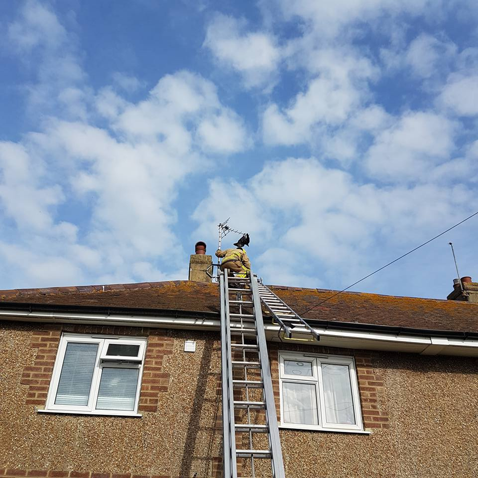 help rescue a crow in Eastbourne