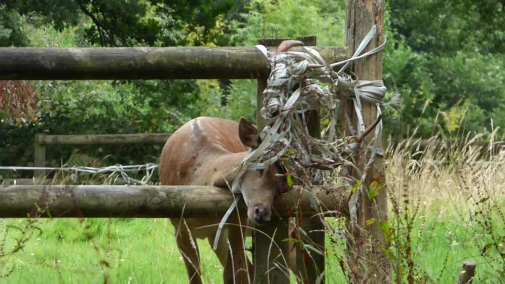 High Hurstwood Deer Rescue 20th Aug 2016 (2)