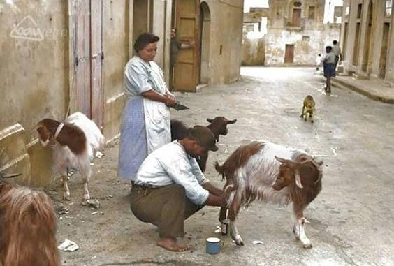 Gozo goat dairy at your doorstep - now strictly banned!