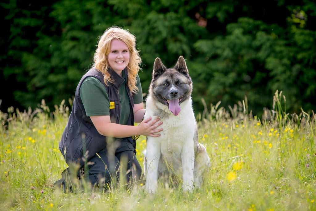 Sarah-Fortey-Home-From-Home-co-ordinator-with-Rosemary-the-Akita-who-was-on-the-foster-scheme