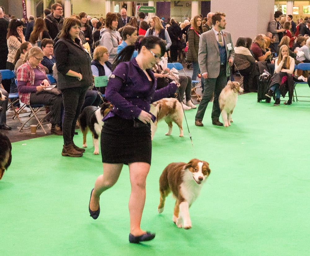 Strutting their stuff in the show ring