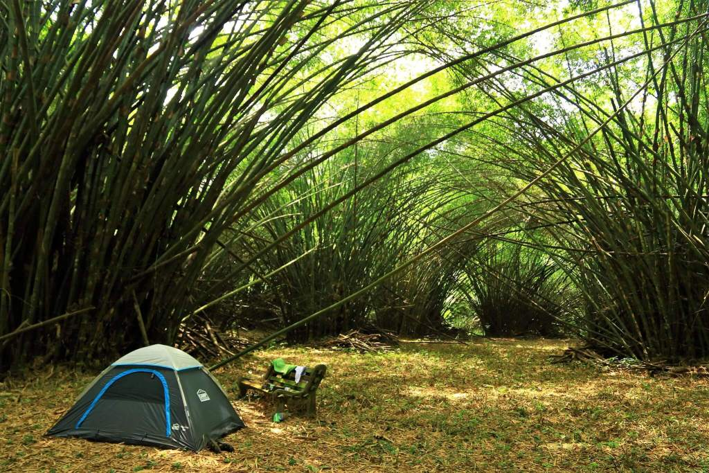 Camping in the Bamboo Cathedral Ankasa Reserve