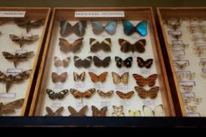 MalDia Insects butterflies and moths