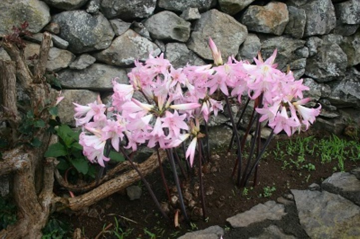 The Azores are famous for their spring flowers