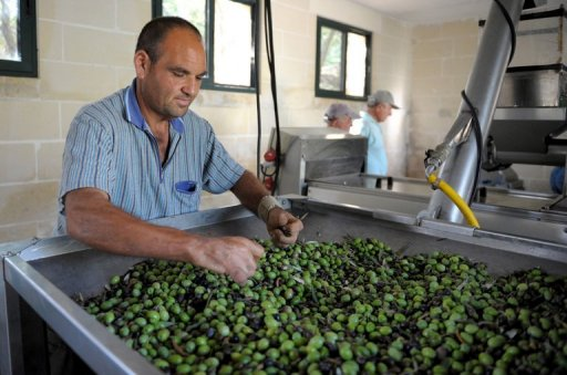 MalDia Sorting the olives
