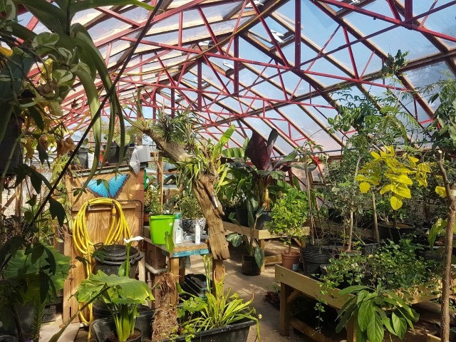 Pic Tropical greenhouse