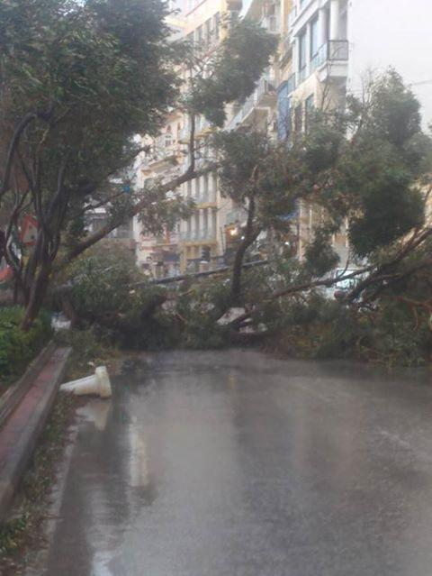 MalDia Havoc on roads from falling trees and branches