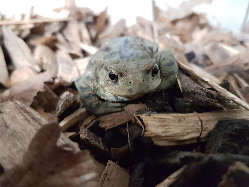 Release Toad