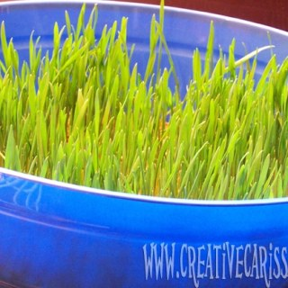 Growing Grass Easter Activity [From the Mamas]