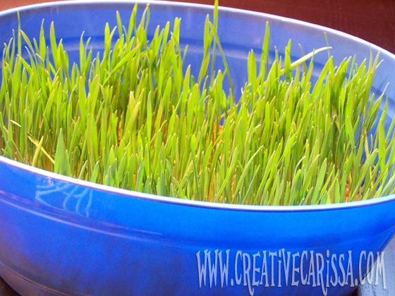 Growing Grass Easter Activity from Creative Green Living & B-InspiredMama.com