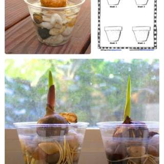 Kids Plant Growth Science Worksheet [From the Mamas]