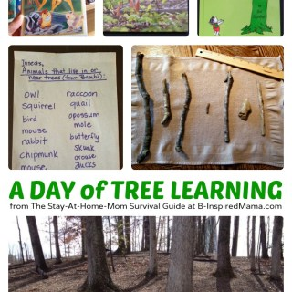 A Day of Fun Tree Themed Nature Activities for Kids