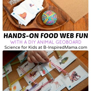 Hands-On Food Web Science for Kids