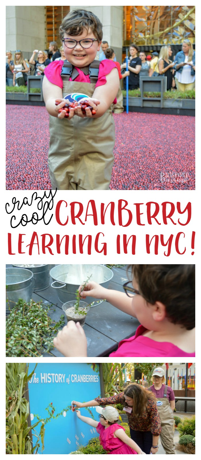 Crazy Fun Cranberry Learning + an awesome Orange Cranberry Muffins Recipe - perfect for Fall