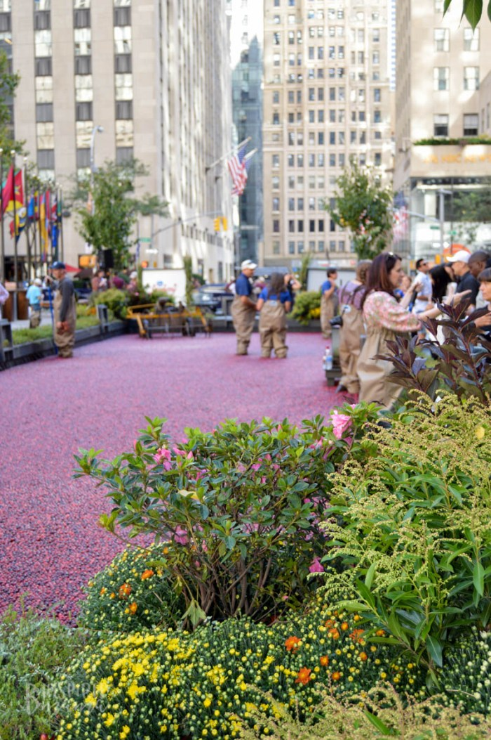 The Ocean Spray #CranberryClassroom in NYC