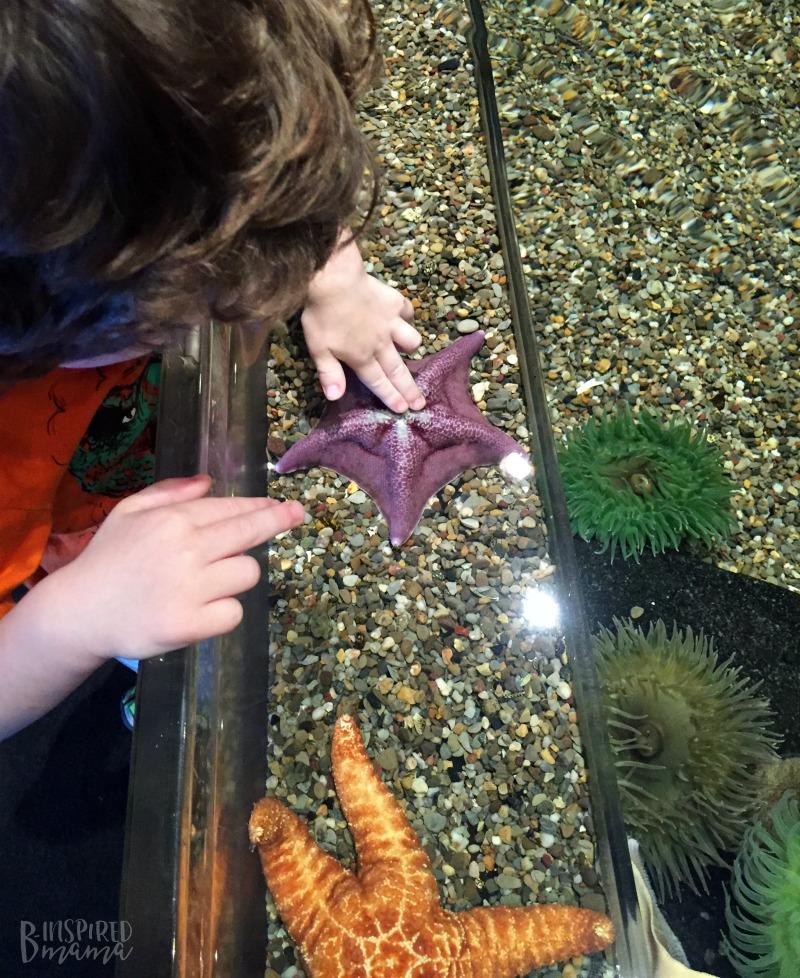 JC loved touching the sea star at Adventure Aquarium