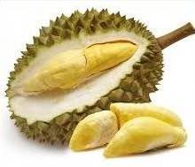 budidaya buah durian