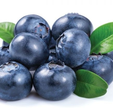 jenis dan manfaat buah blueberry