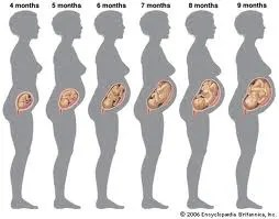 pregnancy how much more should I be eating