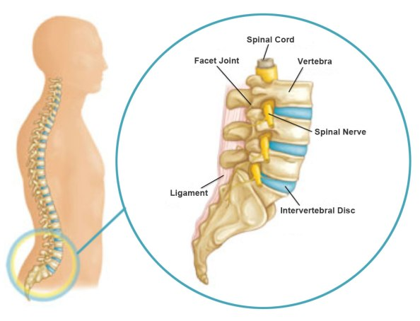 Lumbar spine close up copy
