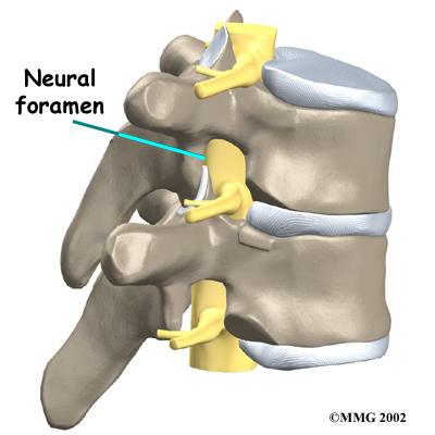 spine neural foramen normal