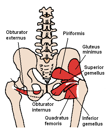 Deep Hip External Rotators
