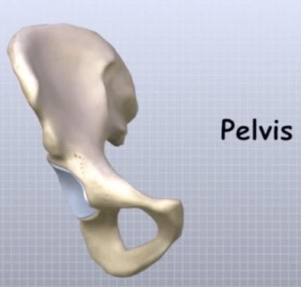 Pelvis Anatomy