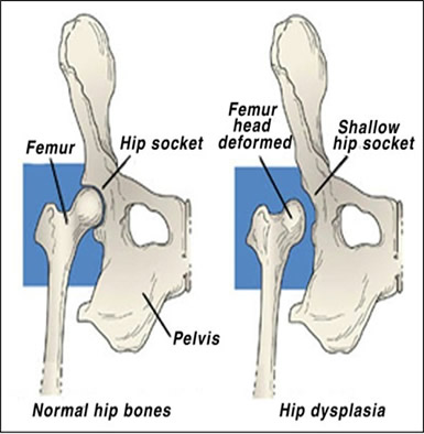 From: http://www.dogbreedhealth.com/wp-content/uploads/2014/05/image001.jpg