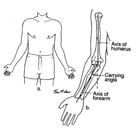 carrying angle 2