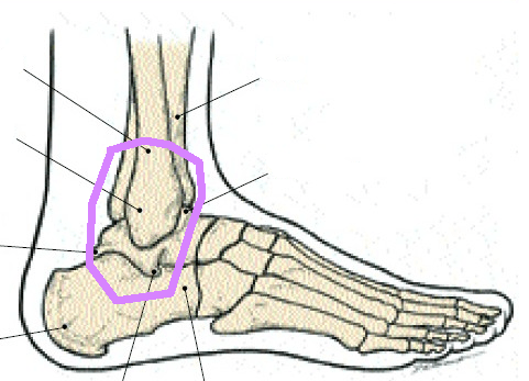 Ankle bones sprain circle
